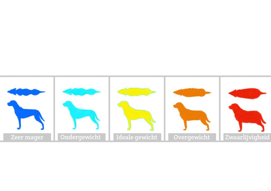Illustratie ideaal gewicht hond