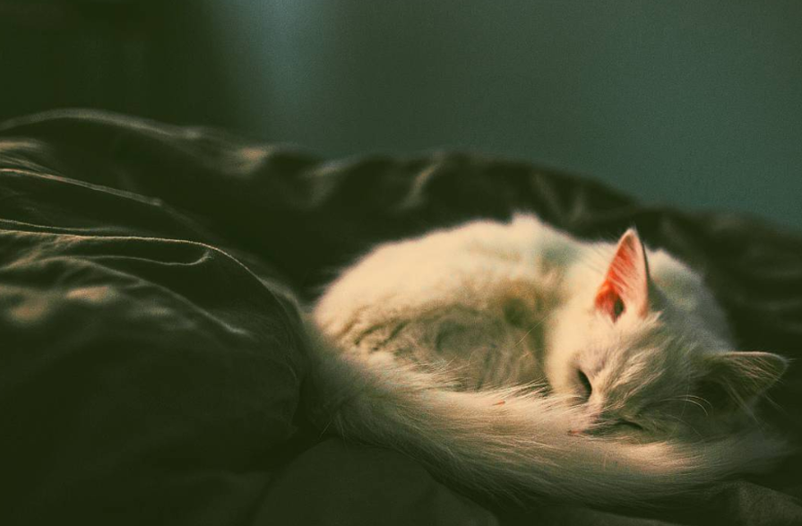 Foto van kitten door Esteban