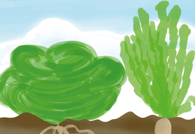 Uitsnede van Eetbare tuin